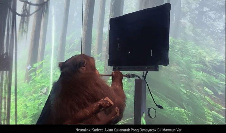 Neuralink: Sadece Aklını Kullanarak Pong Oynayacak Bir Maymunumuz Var
