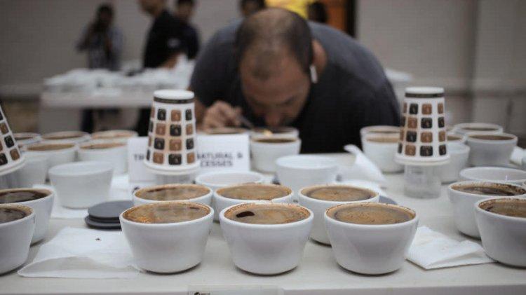 Dünyanın en pahalı kahvesini tatmak nasıl bir duygu?